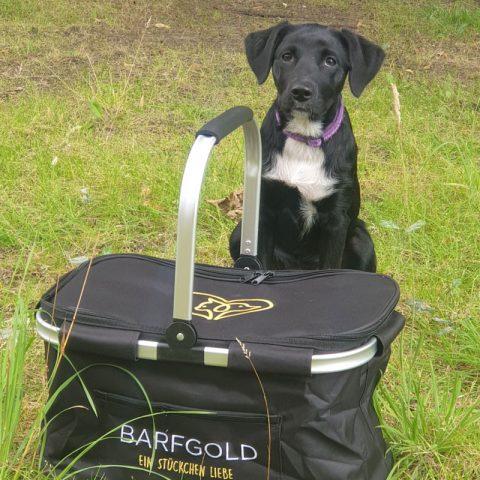 barfgold-infomaterial-korb-beutefaenger-2